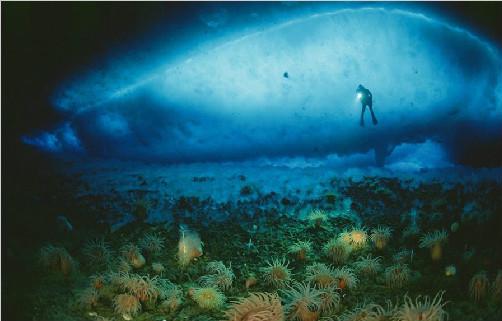 《海底两万里》读后感